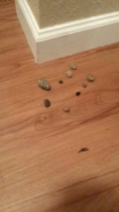 Some of the rocks that appeared in the apartment